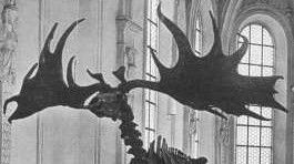 Riesenhirsche überlebten die Eiszeit