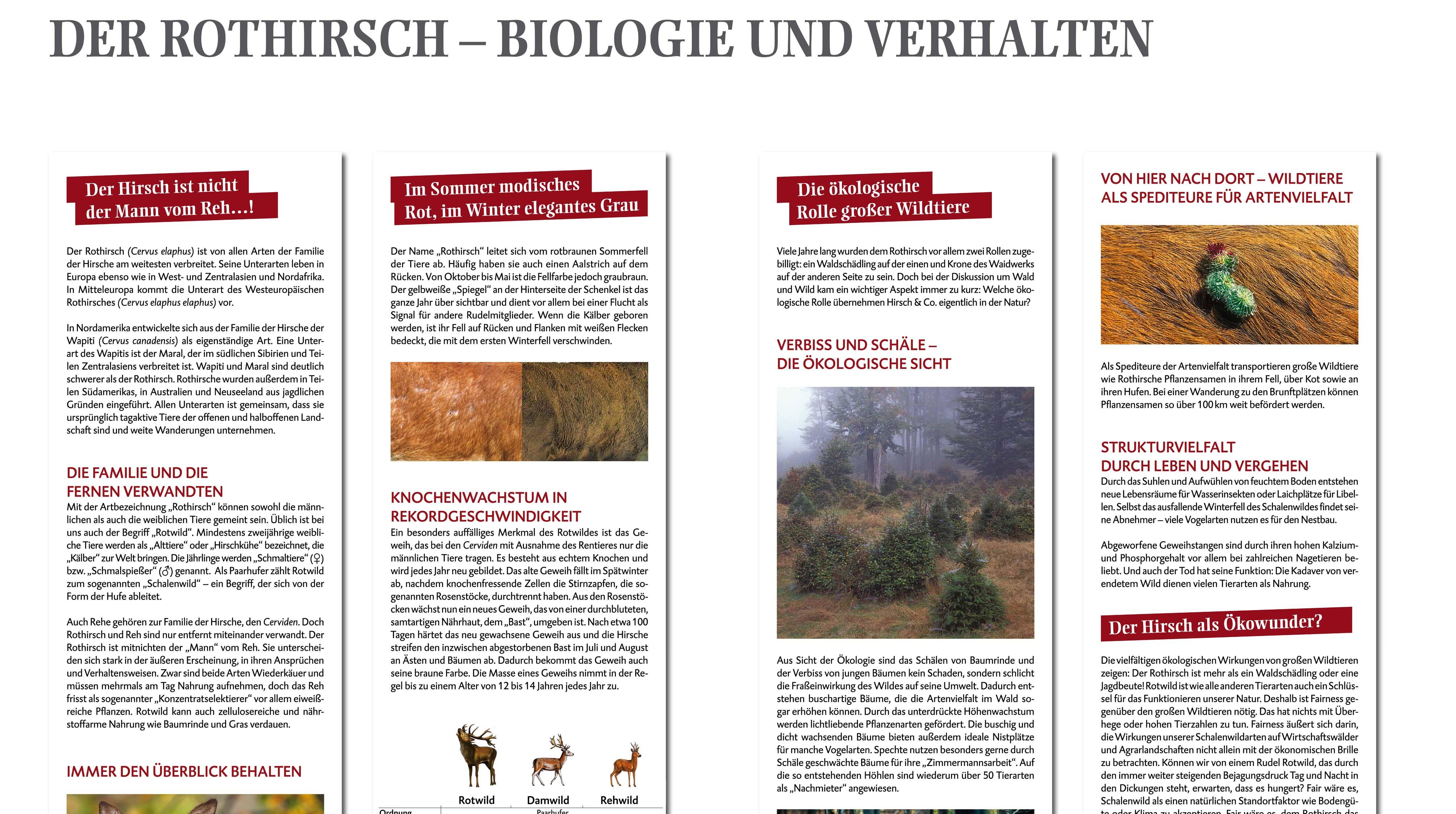 """Wanderausstellung """"Rotwild in Deutschland und Mecklenburg-Vorpommern"""""""