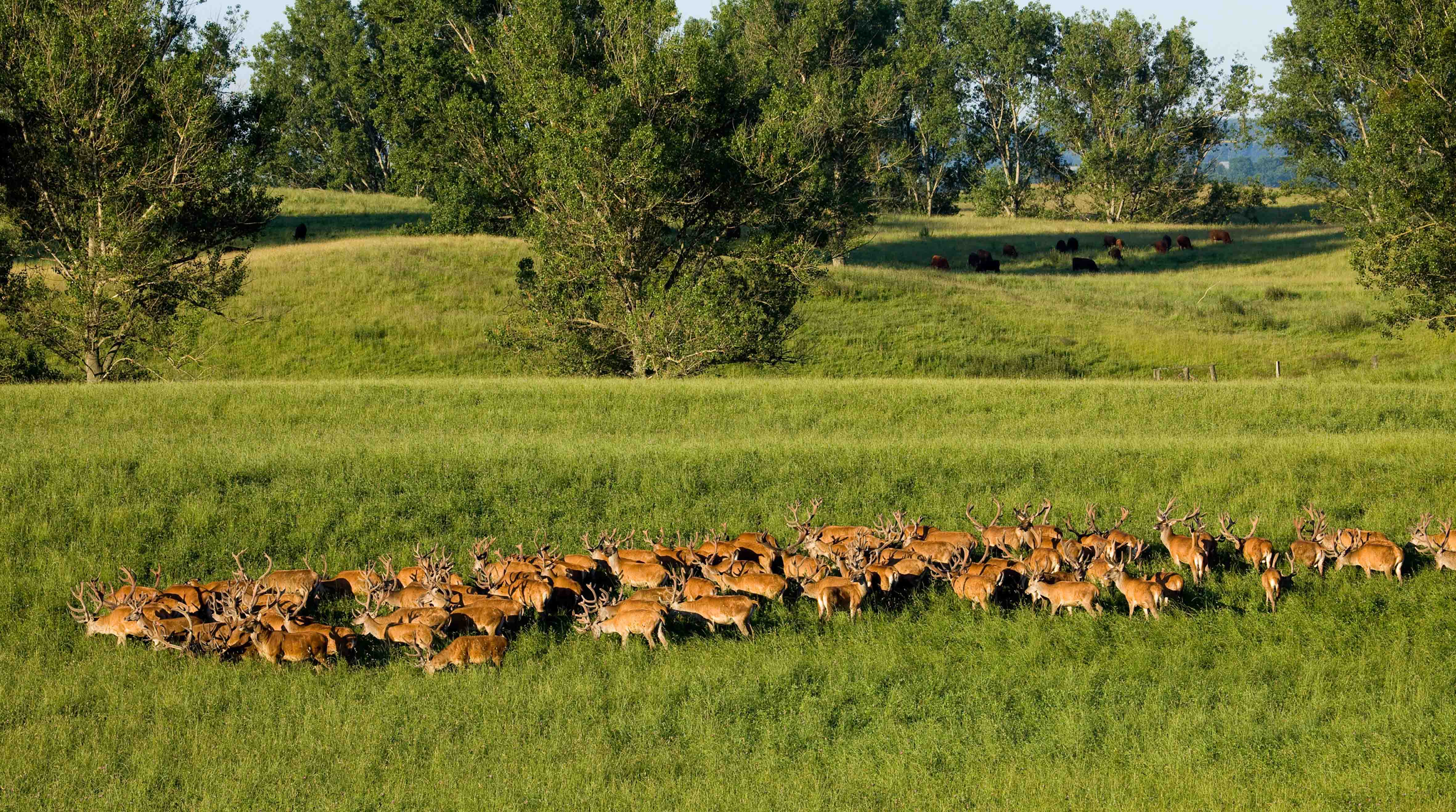 Entwicklung der Rotwildpopulation in der HG Schuenhagen