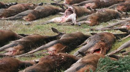 Beitragsbild Jagdstrecke AKinser